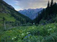 Box Canyon Trail Races - Telluride, CO - box-canyon-trail-races-logo.jpeg
