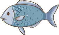 Fishing Charter - San Diego, CA - race113507-logo.bGV6Fm.png