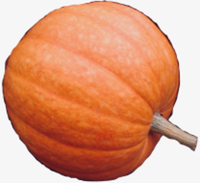 Savitsky Farm's 1st Annual Pumpkin Fun Run - Colchester, CT - race119320-logo.bHtC72.png