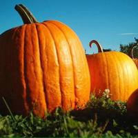Baseggio Halloween Hustle 5k - Atwood, CO - 6e954a6a-5d8f-4192-852b-6f3c679de576.jpg