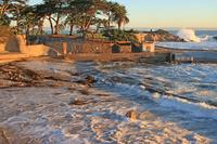 Pacific Grove 10K, 5K, Double 15K - Pacific Grove, CA - 891214f2-0eb4-410e-8adc-50706990fa8f.jpg