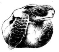 Turtle Trek 5k - Ponce Inlet, FL - race56383-logo.bAy1u_.png