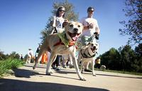 Inaugural Rescue Apparel 5K & 1 Mile Dog Walk - Davie, FL - d4143fe2-814b-4c75-8de7-0e5e9e3e579d.jpg