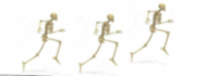Skeleton Skurry - Limerick, PA - race49431-logo.bzytQS.png