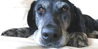 Old Dog Haven Fun 5k Run/Walk - Everett, WA - https_3A_2F_2Fcdn.evbuc.com_2Fimages_2F49661775_2F52179231612_2F1_2Foriginal.jpg