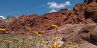 Red Rock Canyon Marathon, 1/2, & 5K - Las Vegas, NV - http_3A_2F_2Fcdn.evbuc.com_2Fimages_2F22707186_2F67070456589_2F1_2Foriginal.jpg