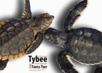 16th Annual Tybee Turtle Trot 5k Beach Run - Tybee Island, GA - race68734-logo.bCZfeL.png