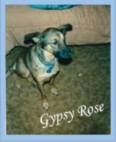 Gypsy Rose Animal Foundation 5K - Mullica Hill, NJ - race63800-logo.bBp88_.png