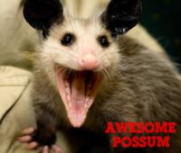 Awesome Possum - Hazel Green, AL - race61246-logo.bA49rB.png