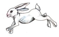 GRAFORD JACKRABBIT 5K RUN - Graford, TX - race64166-logo.bDoGZk.png