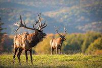 Run For The Elk Half Marathon - Benezett, PA - Elk_2.jpg