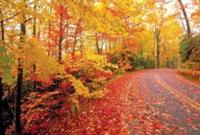 Pocono Half Marathon & Fall Running Spectacular - Bushkill, PA - race86422-logo.bEnH9g.png