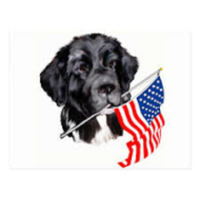 Pets for Heroes OSU Mutt Strut 5k - Lewis Center, OH - race86889-logo.bErJEx.png