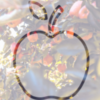 Apple Dash - Traverse City, MI - race91532-logo.bEXeTU.png