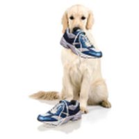 Dog Gone Run - Redmond, OR - race15580-logo.buWdtV.png