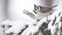 Snow Bird Challenge - Seneca, SC - race95368-logo.bFfDfb.png