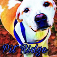 Pit Ridge Virtual Fund Walk/Run/Bike - Anywhere, AR - race96876-logo.bFoTRW.png