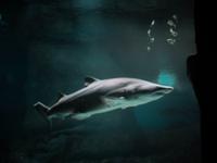 Run with the Sharks Virtual Run - Anywhere Usa, AZ - race100980-logo.bFE_bA.png