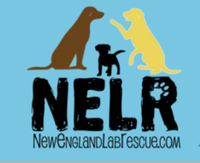 NELR's First Annual Virtual 5K - Limerick, ME - race100923-logo.bFFniF.png