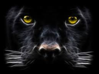 THE PANTHER - Pell City, AL - race106807-logo.bGjdi8.png