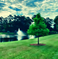 Virtual Run for South Carolina Native Trees - Bluffton, SC - race111502-logo.bGKV-Q.png